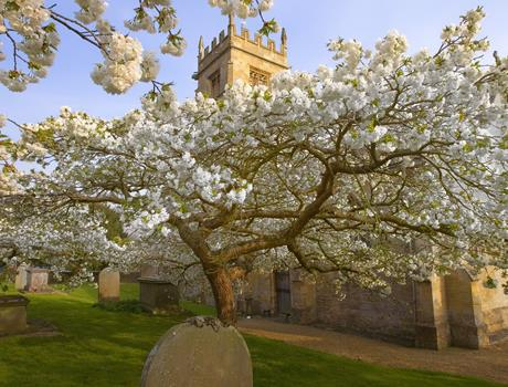 Blenheim Palace, Downton Abbey Village & the Cotswolds Tour from London