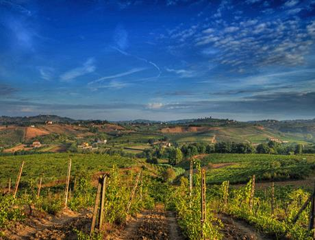 Half day Tour: Wine Tastings + Chianti region from Florence