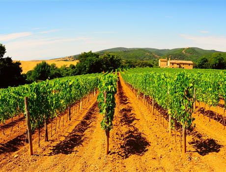 Chianti Half Day Tour from Montecatini