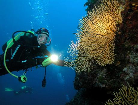 Discovery Dive Tour in Trogir Area from Split and Trogir