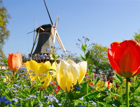 Keukenhof and Amazing Flowerfields - Tour from Amsterdam