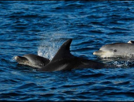 Dolphin Watching Private Day Tour From Lisbon