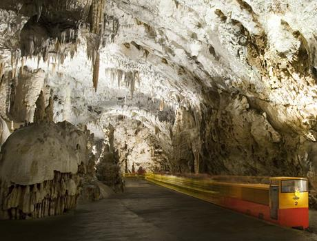 Discover beautiful Postojna Caves & Lipizzaner Horses from Istra