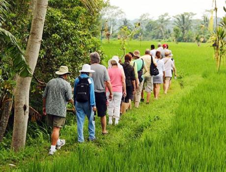 Rice Paddies Trekking Tour with Lunch from Ubud