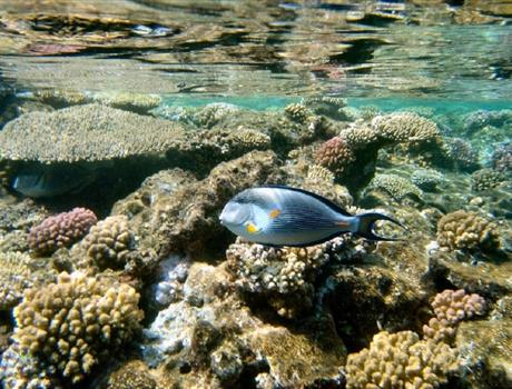 Snorkeling Day Tour in Taba