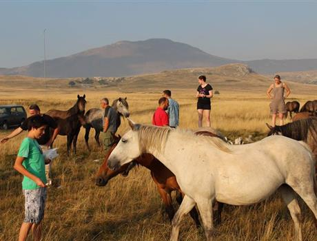 Wild Horses Safari Tour from Split
