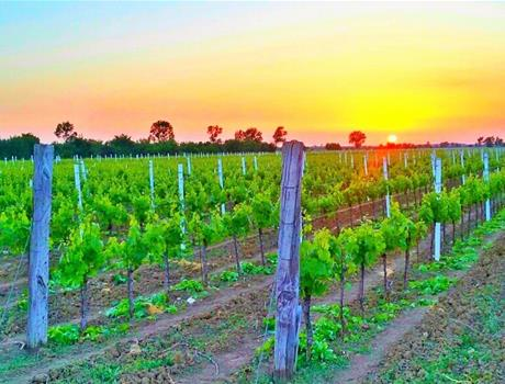 Zadar Hinterland: Wine Tasting Tour from Zadar