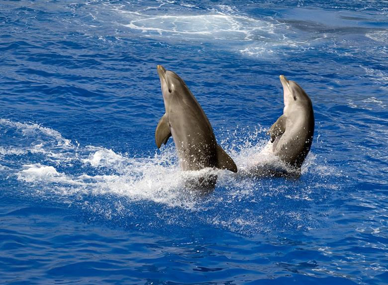 Caves & Dolphin Search on the Boat Dreamer from Algarve
