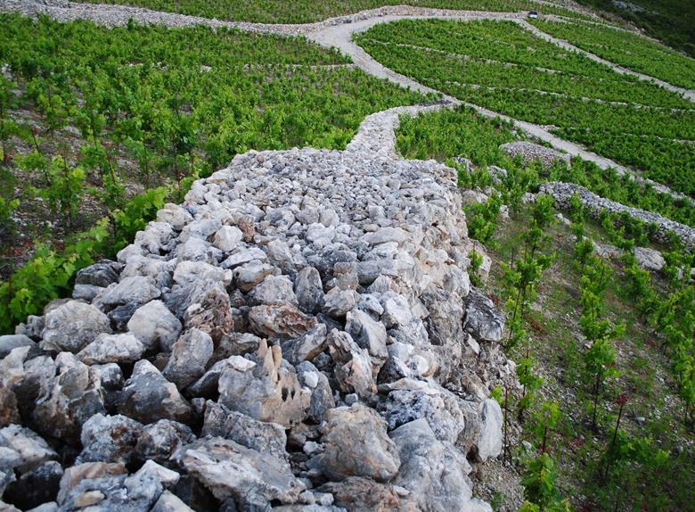 All day Peljesac wine tour from Dubrovnik