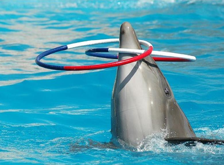 Attend the Dolphins Show from Sharm El Sheikh