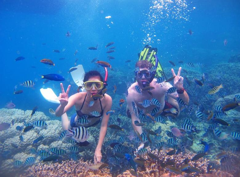 Experience a snorkeling tour of marine life
