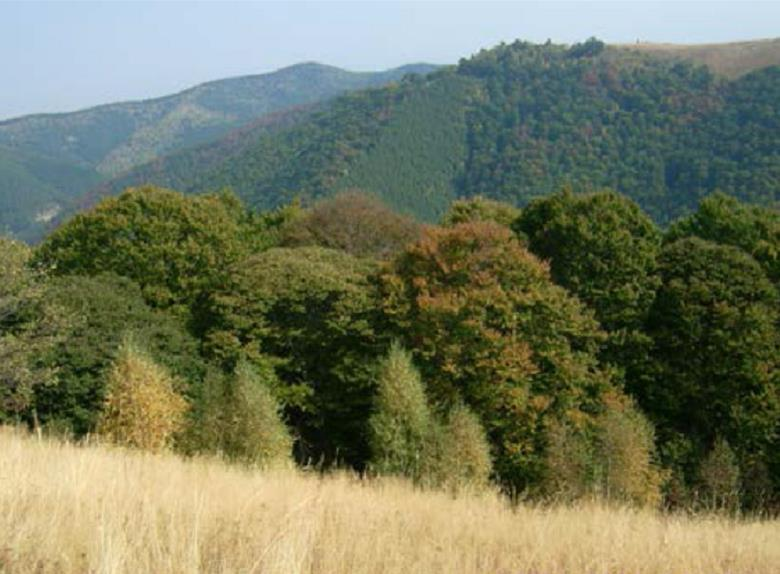 Private Hiking in the Carpathian Montains from Sibiu