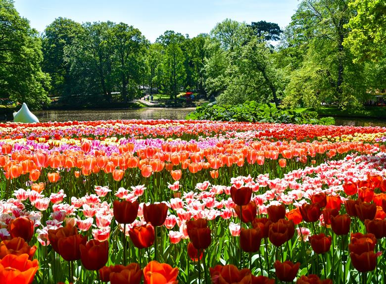 keukenhof and amazing flowerfields tour from amsterdam 2019. Black Bedroom Furniture Sets. Home Design Ideas