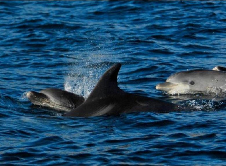 Gibraltar Full Day with Dolphins from Costa de Sol