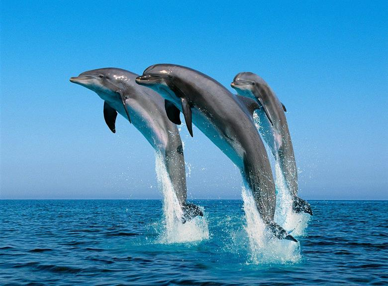 Swim with Dolphins Boat Tour from Hurghada