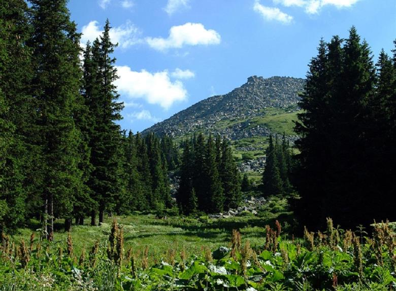 Vitosha Mountain -Full Day Tour from Sofia